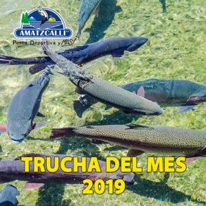 Trucha del mes 2019